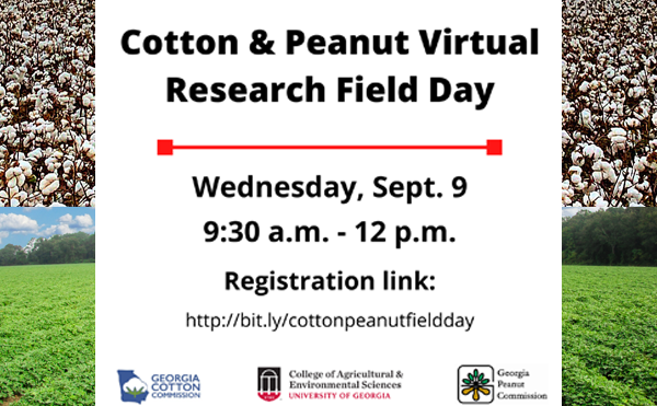 Cotton and Peanut Research Virtual Field Day set for Sept. 9, 2020