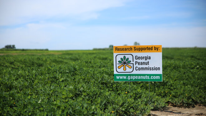 Georgia Peanut Commission increases funding for research projects in 2021